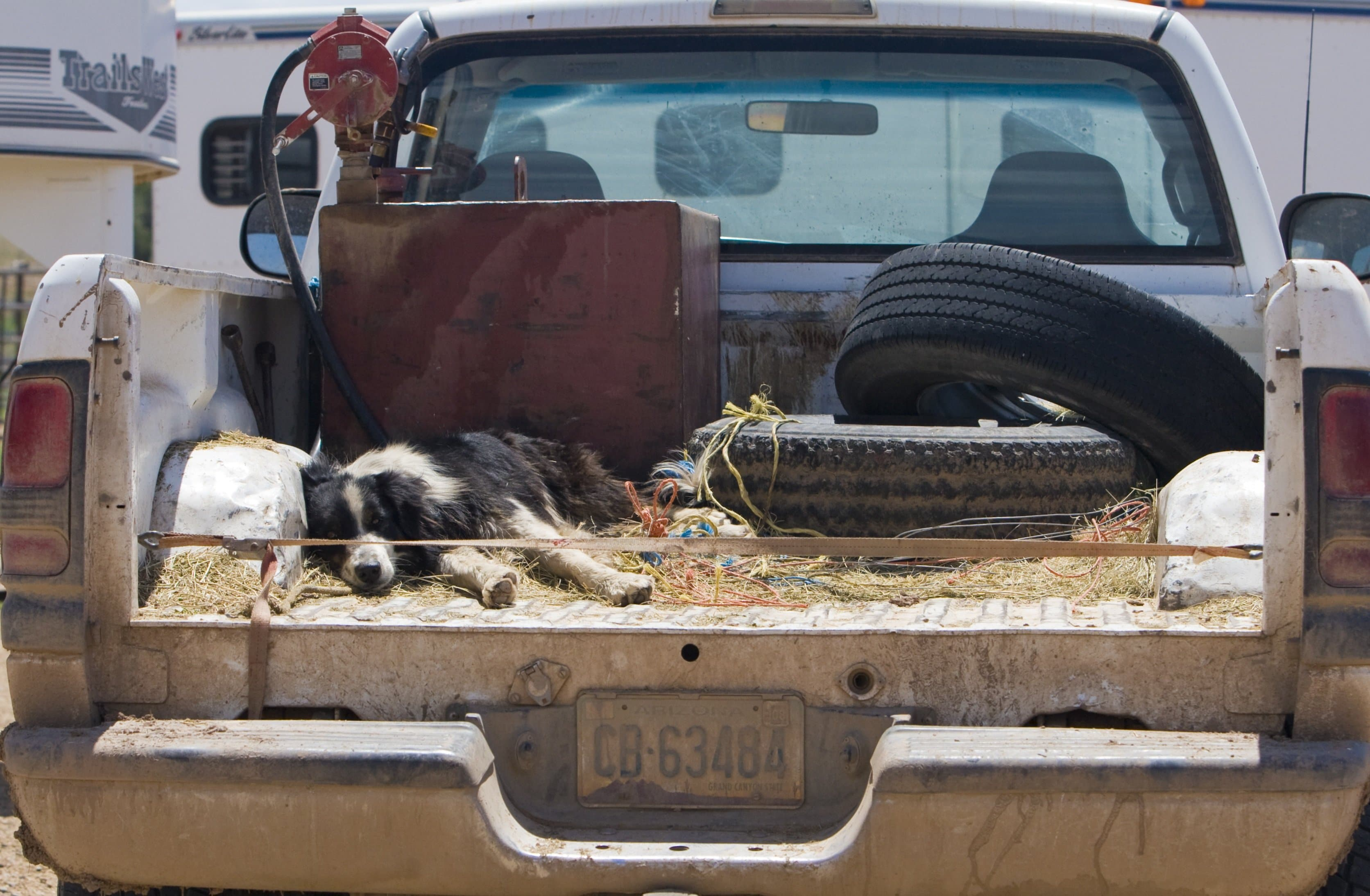 Dog In a Truck Bed