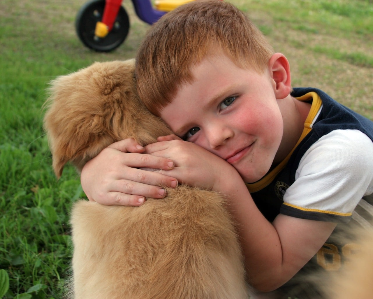 puppy, boy, love